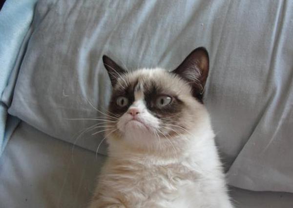 grumpy-cat01