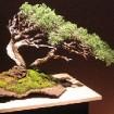 [Muestra] Bonsai para compartir – en el Jardín Japonés de Buenos Aires