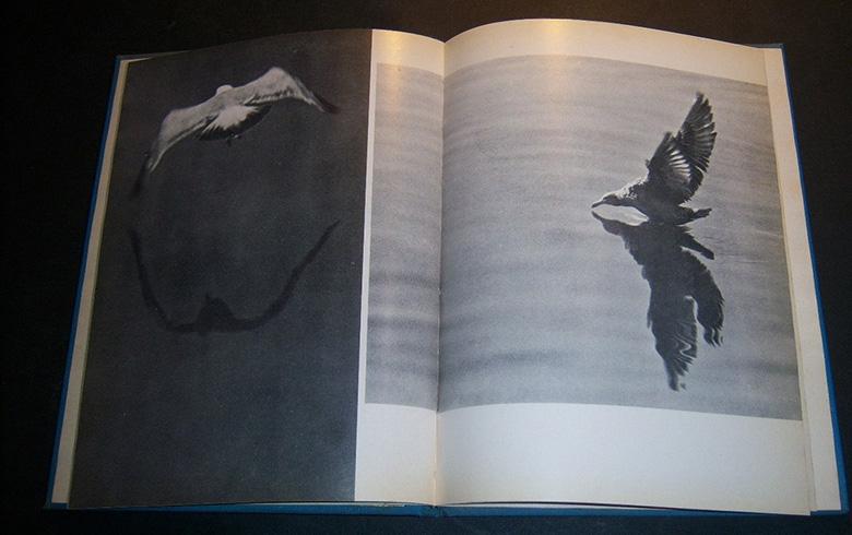 juan-salvador-gaviota02